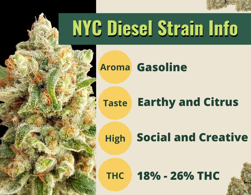 nyc diesel strain info
