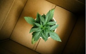DC weed delivered in a box
