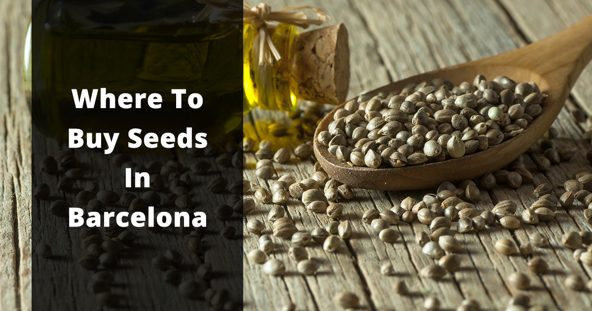where to buy seeds in barcelona