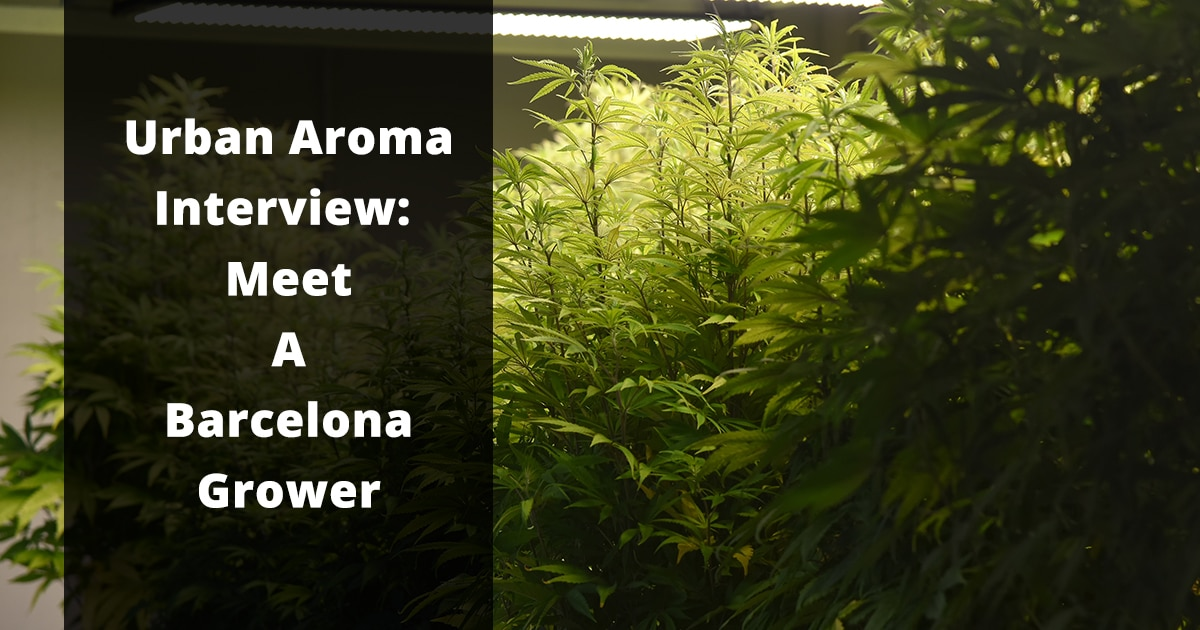 urban aroma interview meet a barcelona grower