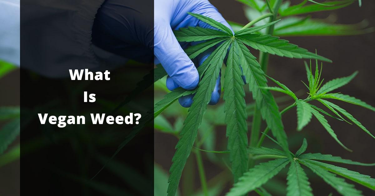 what is vegan weed