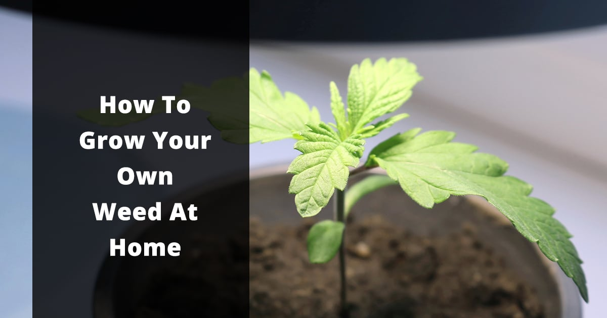 how to grow your own weed at home