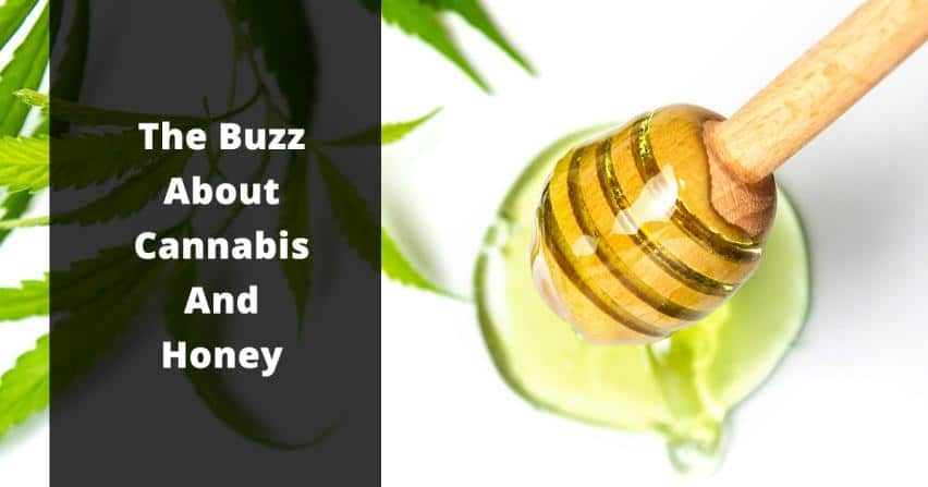the buzz about cannabis and honey