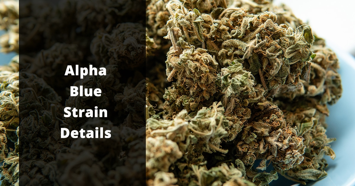 alpha blue strain details