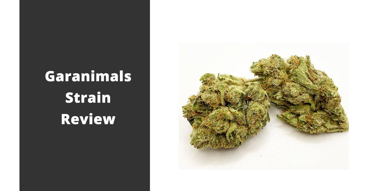 garanimals strain review