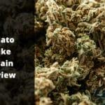 Gelato Cake Strain Review