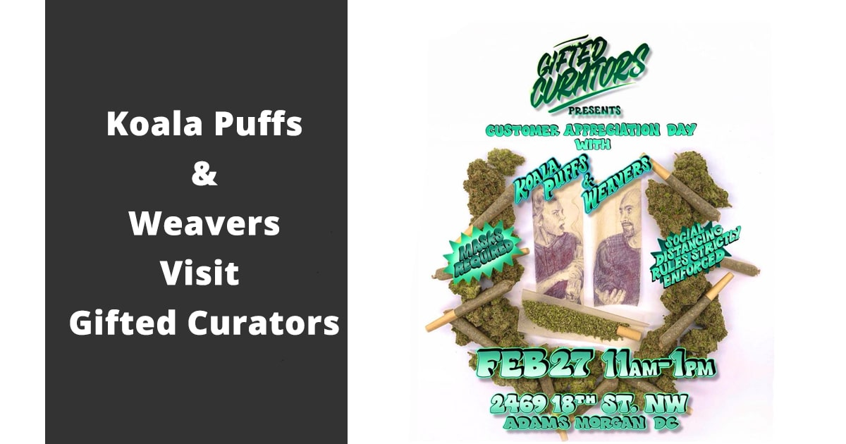 koala puffs and weavers visit gifted curators