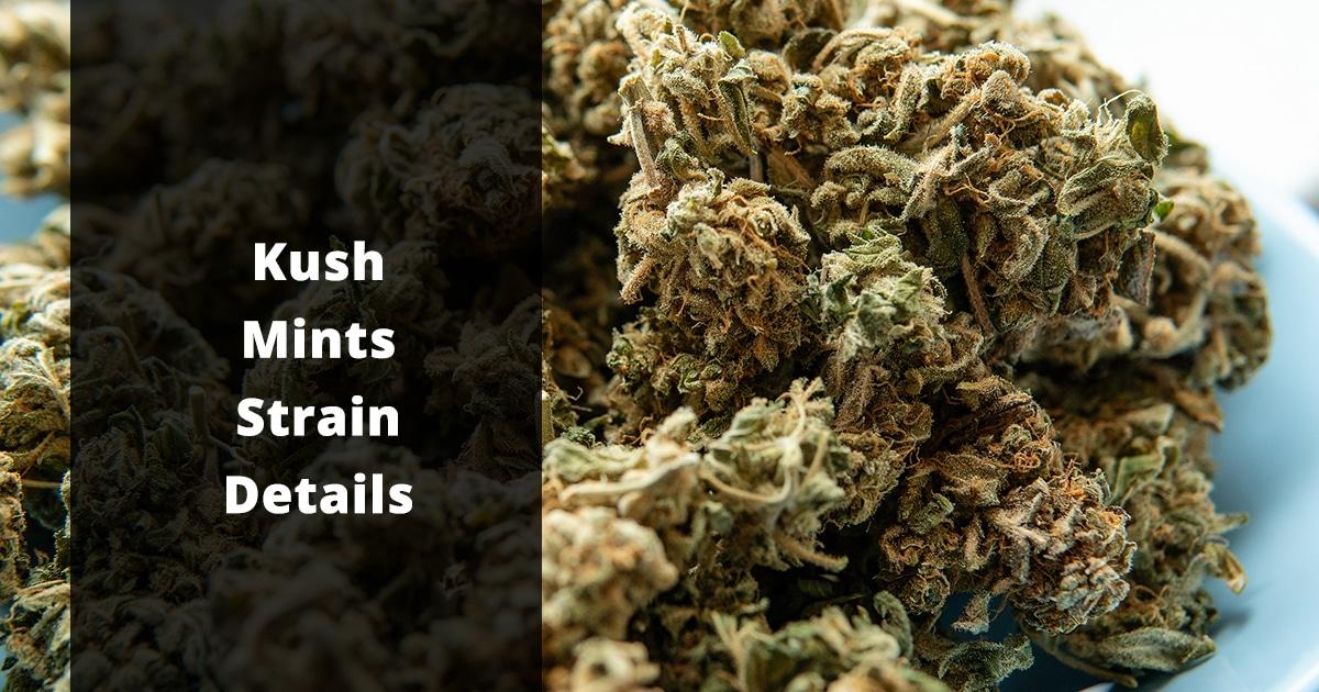 kush mints strain details