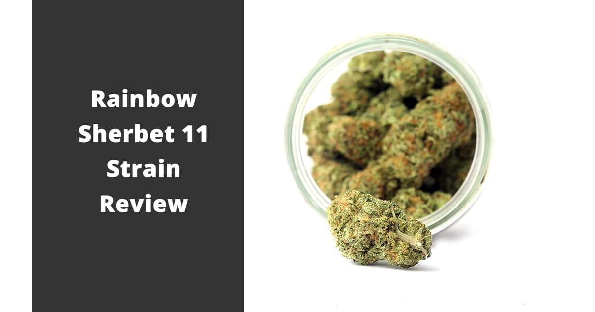 rainbow sherbet 11 strain review
