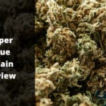 Super Glue Strain Review