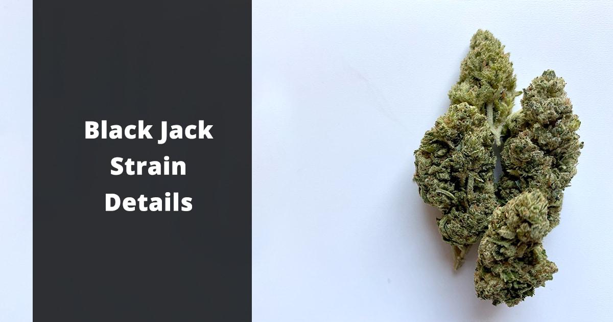 black jack strain details