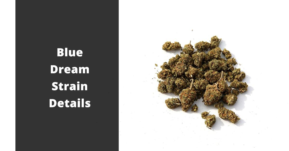 blue dream strain details