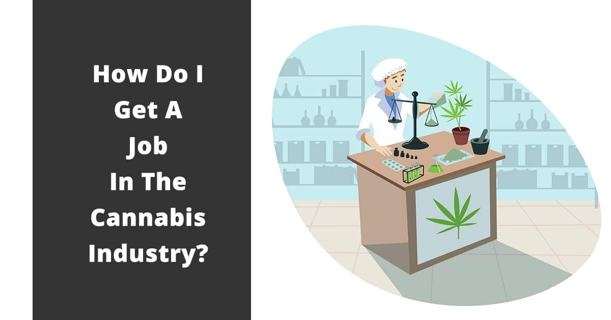 how do I get a job in the cannabis industry
